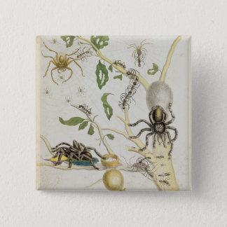 Spiders: Mygole, plate 18 from 'Over de Voorteelin 15 Cm Square Badge