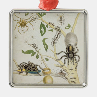 Spiders: Mygole, plate 18 from 'Over de Voorteelin Silver-Colored Square Decoration
