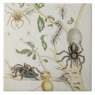 Spiders: Mygole, plate 18 from 'Over de Voorteelin Tile
