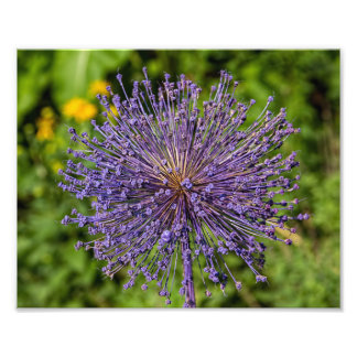 Spike Purple Flower Photographic Print
