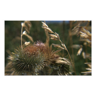 Spikey Bloom Close-up Photo Print
