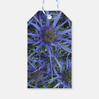 SPIKY BLUE SEA HOLLY FLOWER Gift tag