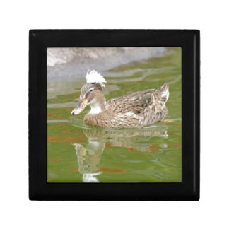 Spiky haired duck small square gift box