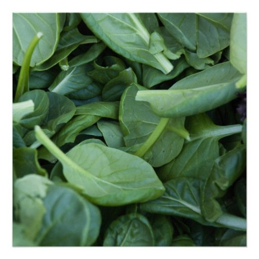 Spinach Leaves Poster