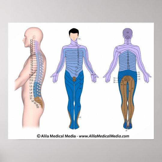 Spinal cord injury basis, medical drawing. poster