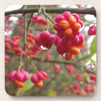 Spindle Fruit And Rain Drops Coaster