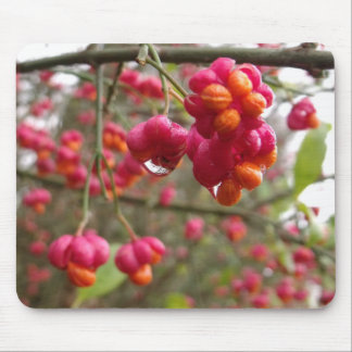 Spindle Fruit And Rain Drops Mouse Pad
