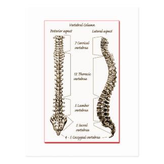 Spine Details Sepia2 Postcard