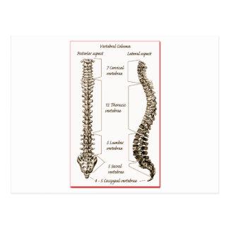 Spine Postcard