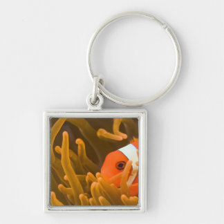 Spinecheek anemonfish, Tulamben, North Bali, Silver-Colored Square Key Ring