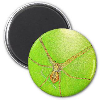 Spinne auf Blatt 6 Cm Round Magnet