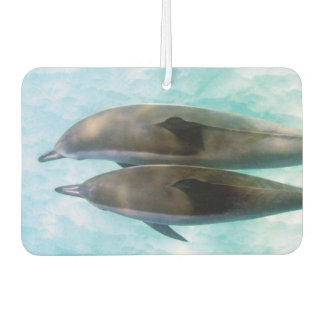 Spinner Dolphins | Oahu Hawaii
