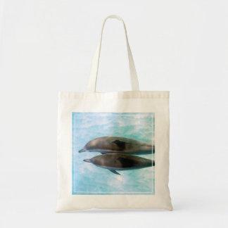 Spinner Dolphins   Oahu Hawaii