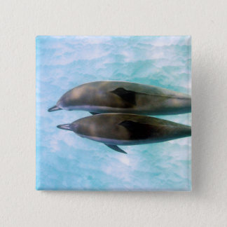 Spinner Dolphins | Oahu Hawaii 15 Cm Square Badge