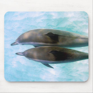 Spinner Dolphins | Oahu Hawaii Mouse Mat