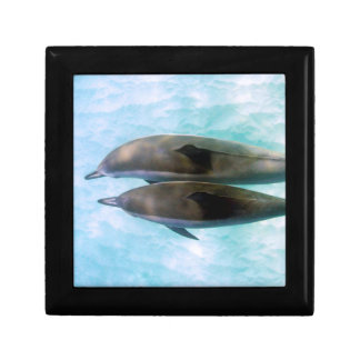 Spinner Dolphins | Oahu Hawaii Small Square Gift Box