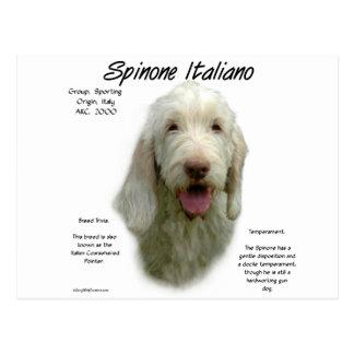 Spinone Italiano History Design Postcard