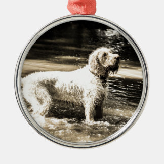 Spinone Silver-Colored Round Decoration
