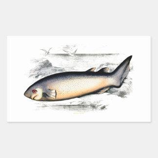 SPINOUS SHARK STICKER