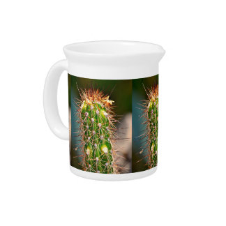 Spiny Cactus Pitcher