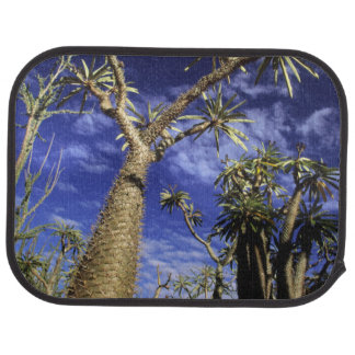 Spiny Forest Formed Of Pachypodium Trees Car Mat