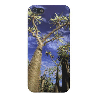 Spiny Forest Formed Of Pachypodium Trees iPhone 5 Case