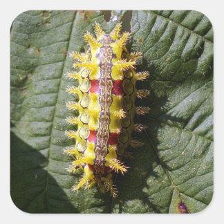 Spiny Oak Caterpillar Square Sticker