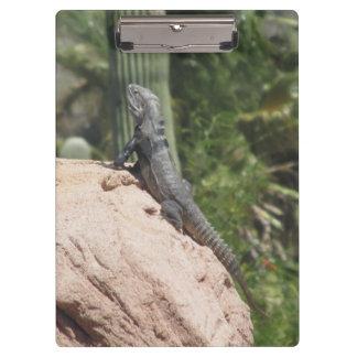 Spiny-tailed Iguana Clipboard