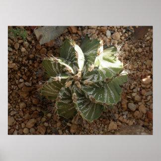 spiral cactus poster