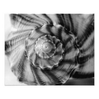 Spiral Shell, Black and White Photo Print