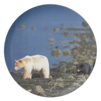 spirit bear, kermode, black bear, Ursus Dinner Plates