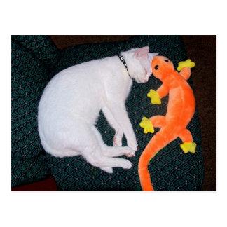 Spirit & Gecko Postcard