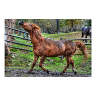 Spirited Playful Chestnut Ranch Horse Equine Photo Print