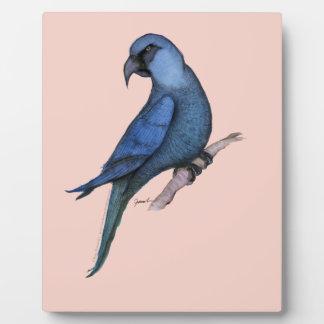 spix's macaw, tony fernandes plaque