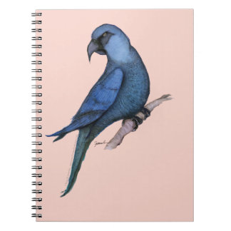 spix's macaw, tony fernandes spiral notebooks