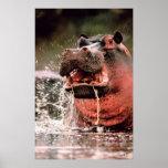 Splash Hippopotamus Portrait Posters
