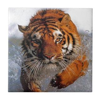 Splashing Majestic Bengal Tiger Swim Toward Prey Small Square Tile