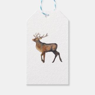 Splendid stag