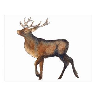 Splendid stag postcard