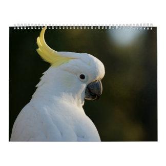 Splendour-full bird world as calendars