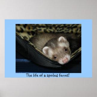 Spoiled Ferret Poster