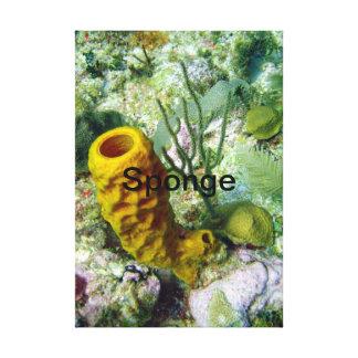 Sponge Canvas Print