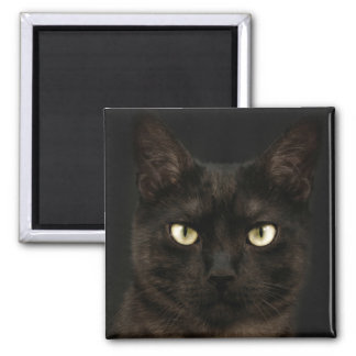 Spooky black cat square magnet