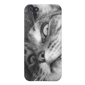 Spooky cat iPhone 5/5S cases
