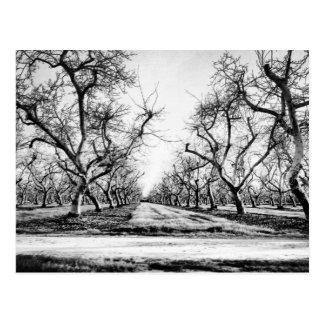 Spooky Row of Trees Postcard