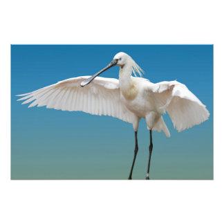 Spoon heron landing photo print