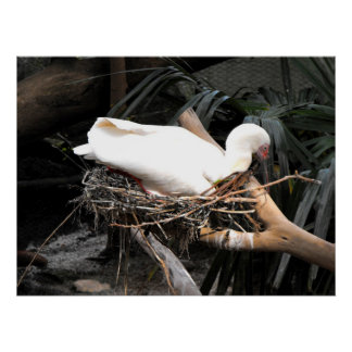 Spoonbill bird on nest in Spain Poster