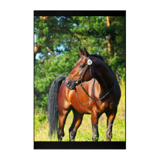 sportive horse acrylic wall art