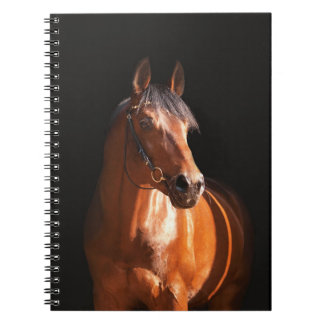 sportive horse at black spiral notebook