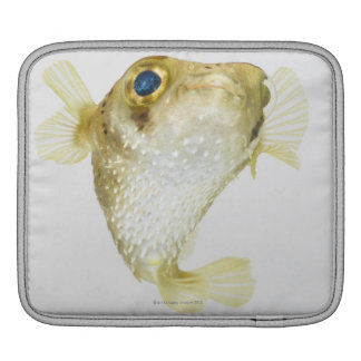 Spot-fin porcupinefish (Diodon hystrix) iPad Sleeve